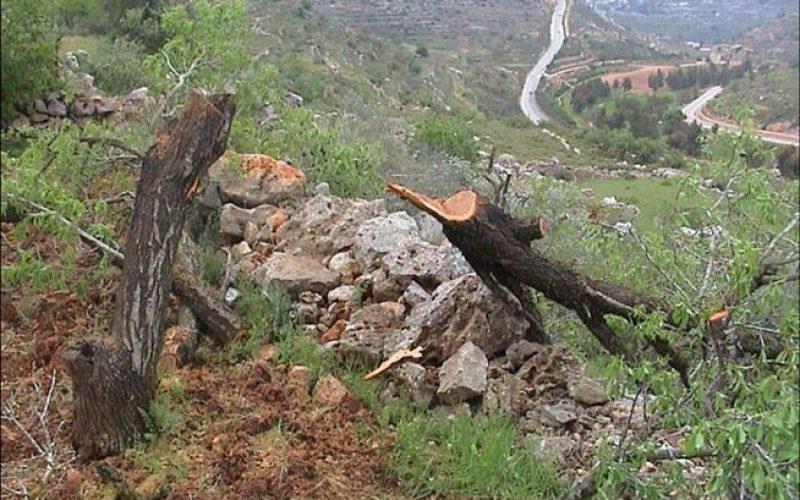 State Vandalism: Israel Disrupts Nature in Al-Walaja Village