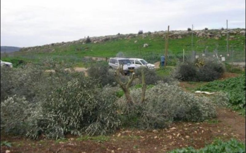 The Israeli aggressive measures continue in Beit Sira village
