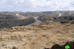 Land taken over for settlers' protection in Hebron Governorate