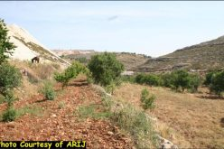 Artas village lands are targeted for settlement expansion