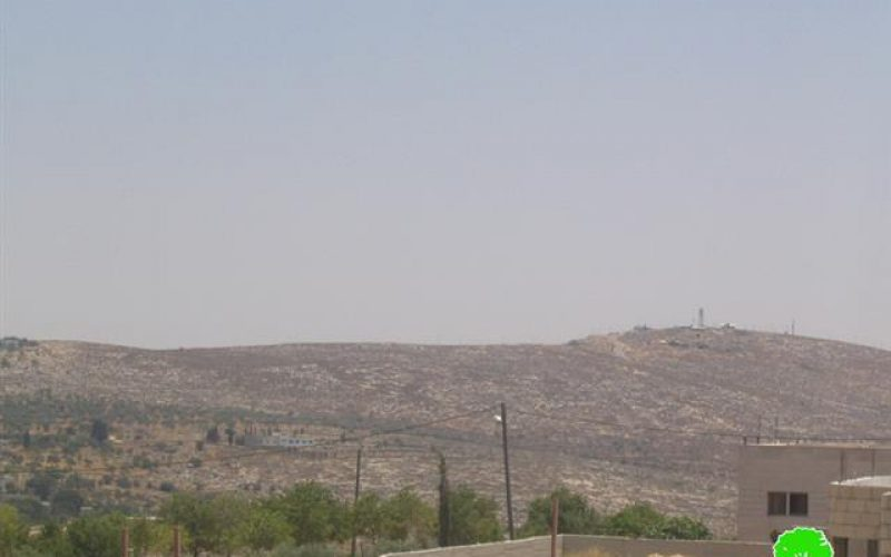 Olive tree stealing and re-plantation continues by Israeli colonists under official protection