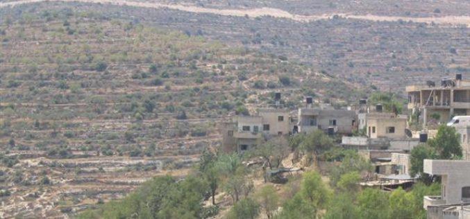 مستوطنو معاليه ليفونا يدمرون العشرات من أشجار الزيتون في قرية اللبن الشرقية