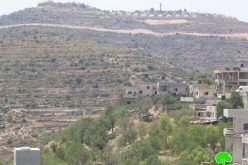 Colonists from Ma'ale Levona destroy dozens of olive trees in Al Lubban Ash Sharqiya village
