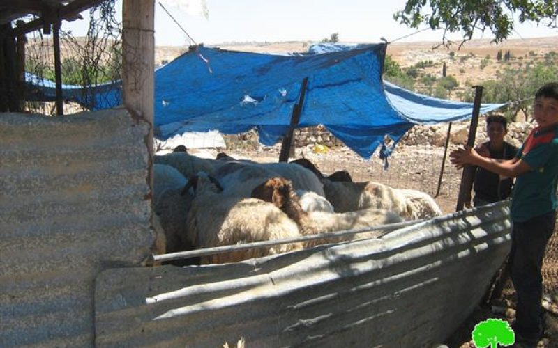 The Settlement of Shima is Expanding at the Expense of the Village of Shwieka