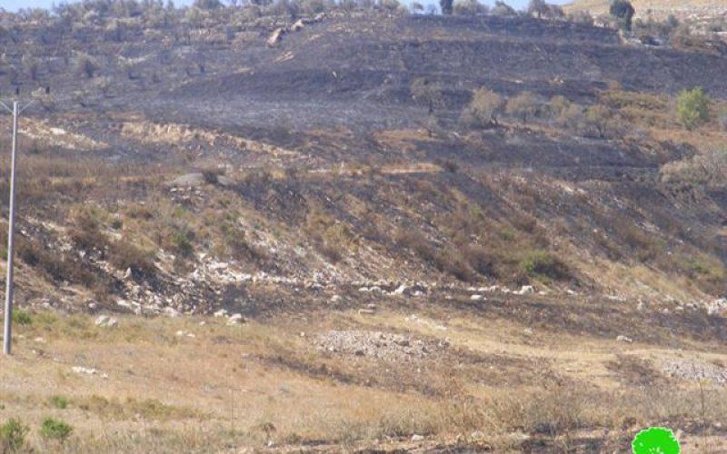 مستوطنو يتسهار يعتدون على المواطنين الأراضي الزراعية في بلدتي بورين و حوارة