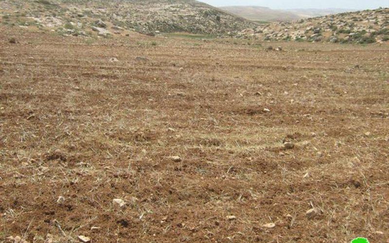 """أراضي خربة التواني أصبحت مرتعاً لأغنام مستعمرة """"ماعون"""""""