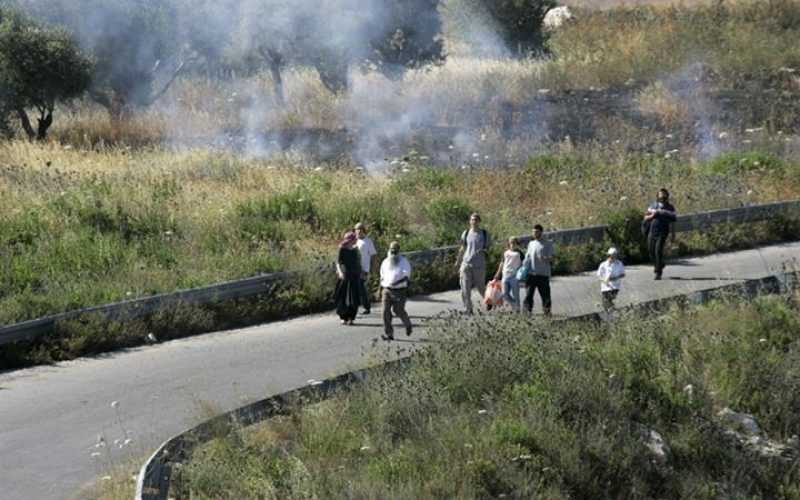 Burning Palestinian Lands; A New-Old Israeli Colonists Policy