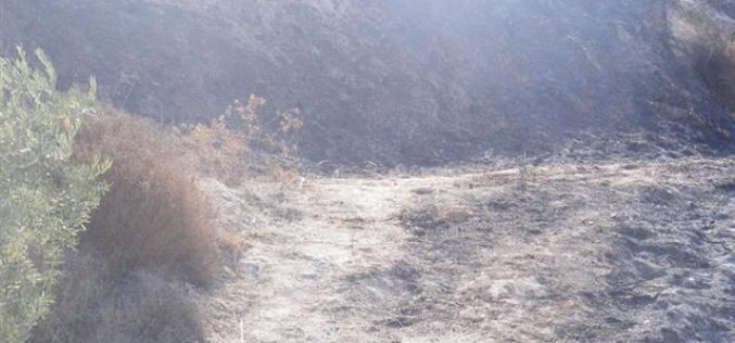 Settlers' war of arson continued against Palestinian land in the occupied West Bank