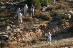 On going attacks by Beit Ayin colony settlers against Khirbet Safa under full army protection