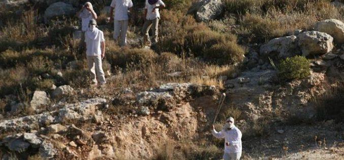 المستعمرون الإسرائيليون يواصلون اعتداءاتهم ضد المواطنين الفلسطينيين وممتلكاتهم