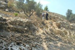 Israeli Colonists Burn More Palestinian Lands in Beit Ummar and Safa