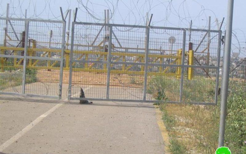 قوات الاحتلال تمنع مزارعي قرية مسحة من الوصول إلى أراضيهم  خلف الجدار العنصري