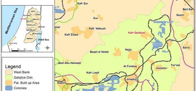 مستوطنون إسرائيليون يقتلعون العشرات من اشجار الزيتون في قرية كفر قدوم