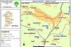 اقتلاع عشرات أشجار الزيتون من قرية بورين