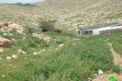 New Stop-Work Orders against Palestinian Structures in Al Hadidiya and Samra