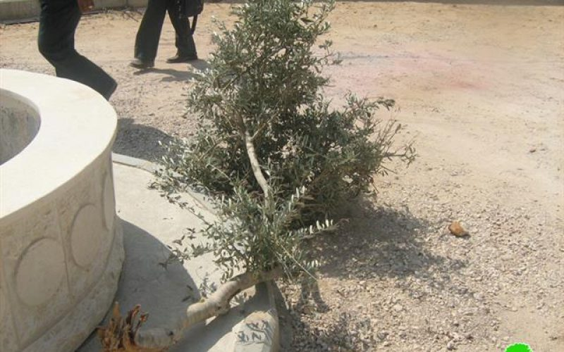 مستوطنو يتسهار يصعدون اعتداءاتهم … وجيش الاحتلال يغلق طريقاً بالسواتر الترابية في بلدة حوارة