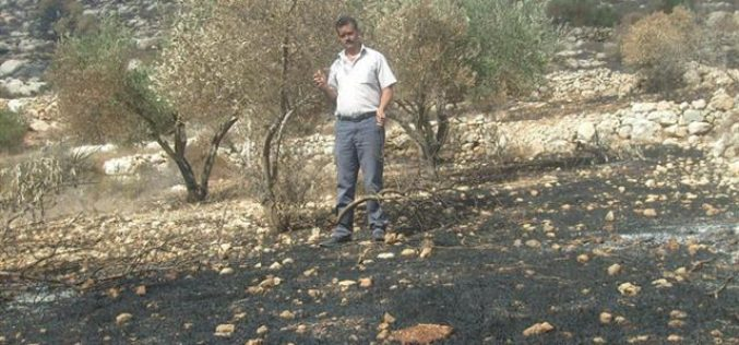 The Palestinian Olive Survival Battle <br> &#8220;Israeli Aggressions during the 2010 Olive Picking Season&#8221;