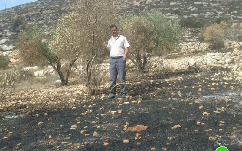 "The Palestinian Olive Survival Battle <br> ""Israeli Aggressions during the 2010 Olive Picking Season"""