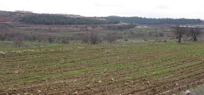 Israeli Occupation Authorities Confiscate 600 Dunums of Brikot Lands