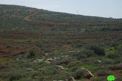 المستوطنون  يقطعون  350 غرسة زيتون من قرية قصرة