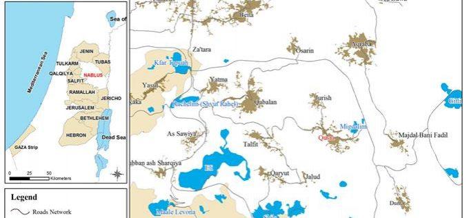 Israeli Settlers Uprooted 350 Small Olive Trees