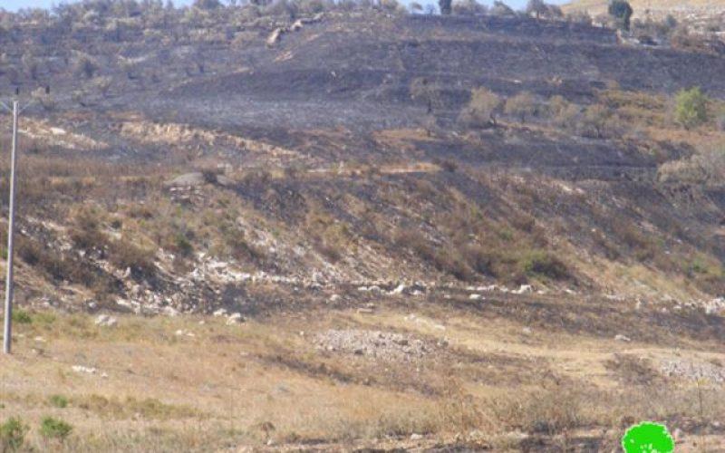 إضرام النار في حقول القمح في قريتي  مادما وفرعتا – محافظة نابلس