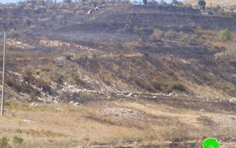 Setting Wheat Fields Ablaze in Far'ata and Madama – Nablus Governorate