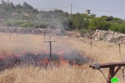 Setting Agricultural Fields Ablaze in  Beit Ummar – Hebron Governorate