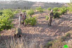مطاردة المزارعين الفلسطينيين ومنعهم من الوصول إلى أراضيهم  بلدة بيت أمر في  محافظة الخليل