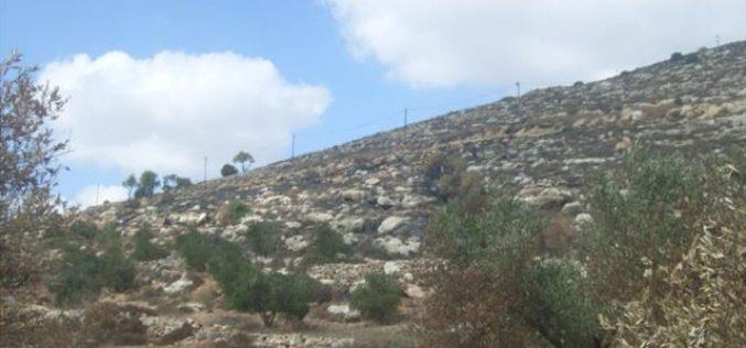 مستوطنو مستوطنة يتسهار يحرقون عشرات الدونمات المزروعة بالزيتون في قرية بورين – محافظة نابلس
