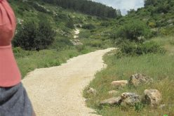 ربط المستوطنات الإسرائيلية في واد قانا بشبكة طرق  واحدة – محافظة  سلفيت