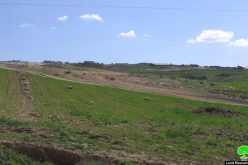 An Israeli Colonists Attempted Theft – Hebron city