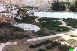 """Talmudic"" Parks in the Occupied City of Jerusalem"