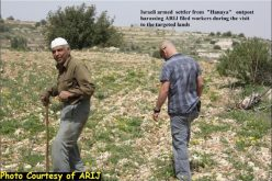 """500 Trees Destroyed"" <br> Land Razing in Al Khader Village west of Bethlehem Governorate"