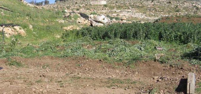 هدم 3 برك مياه زراعية في خربة المجنونة