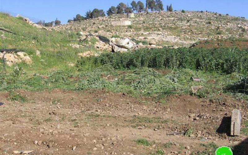 Demolition three Water Pools in Al Majnouna