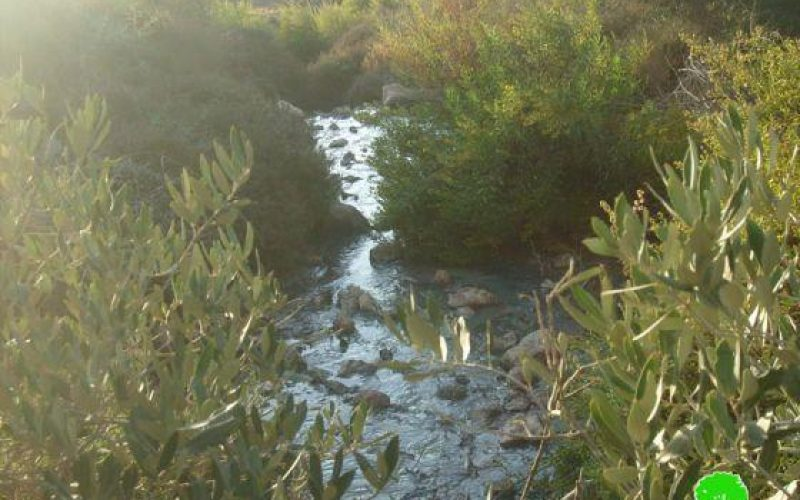 Emmanuel Colonists Pump Sewage towards Palestinian Lands