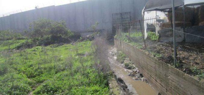 الجدار العنصري في مدينة قلقيلية يتسبب في فيضانات و اتلاف المحاصيل الزراعية