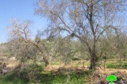 Shavi Shamron Sewage in Palestinian Fields
