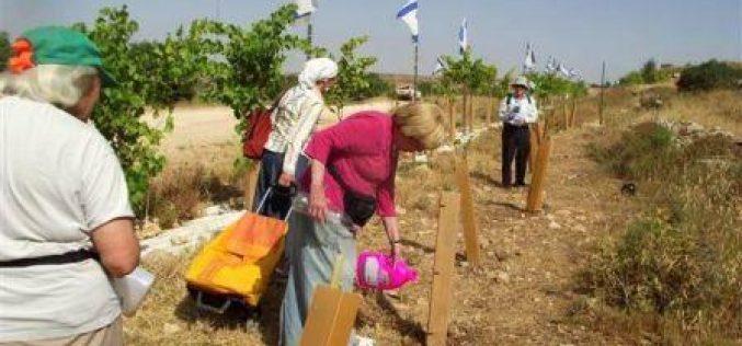 مستعمرون يزرعون أراضي المواطنين باشتال زيتون تمهيداً لمصادرتها في بلدة الخضر