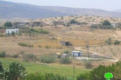 الاحتلال الإسرائيلي يصادر رأسين من الأبقار في منطقة فروش بيت دجن