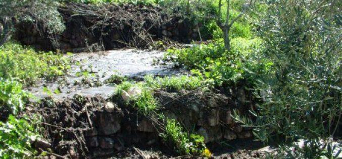فتح المياه العادمة مع روث الأبقار باتجاه الأراضي الزراعية في قرية نحالين