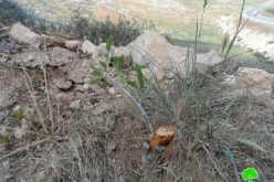 The Israeli authorities uproot and confiscate 450 trees in al-Dahiriya village