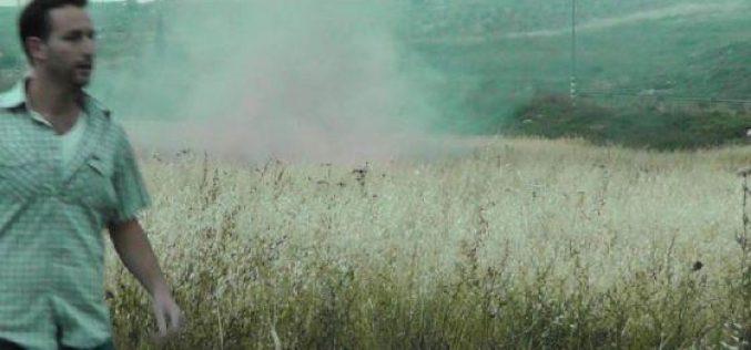 """مستعمرو """"شيلو"""" يتسببون في إحراق 13 دونما من أراض قريوت/ محافظة نابلس"""