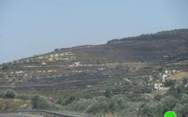 إضرام النيران بنحو 200 دونماً من الأراضي الزراعية في قريتي مادما وبورين