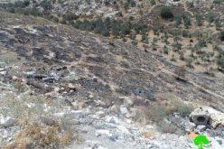 إحراق أشجار زيتون في بلدة بيت عوا / محافظة الخليل