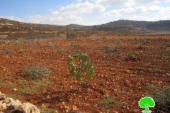 مستعمرون  يدمرون غرفة زراعية و يقتلعون 13 غرسة زيتون في قرية قصرة – محافظة نابلس