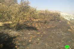 6 Donum Plot Land Burnt in Nablus