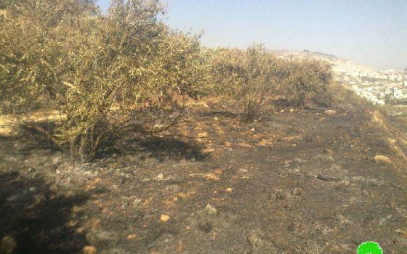 إحراق 6  دونمات زراعية في بلدة حوارة / محافظة نابلس