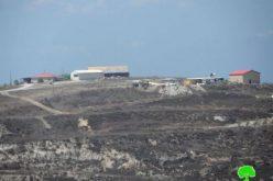 إحراق 48 شجرة زيتون من أراضي قرية تل وصرة / محافظة نابلس